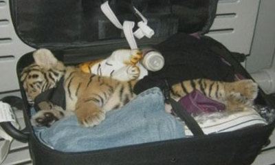 Toy_tiger